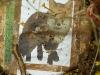 polowanie na lisy 2010